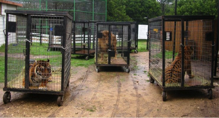Animal Cages In A Circus Ring